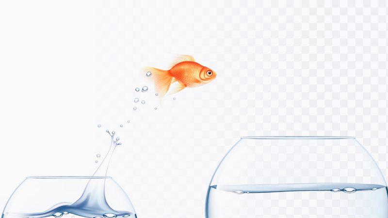 Au royaume de la post-vérité, les poissons rouges sont rois